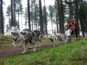 Four dog team