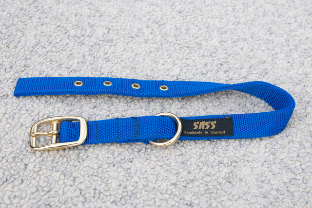 Buckle Collar in new Electric Blue