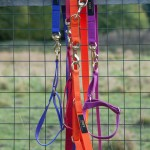 Colourful semi slip collars and leads