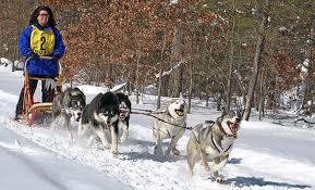 Five dog team, single lead