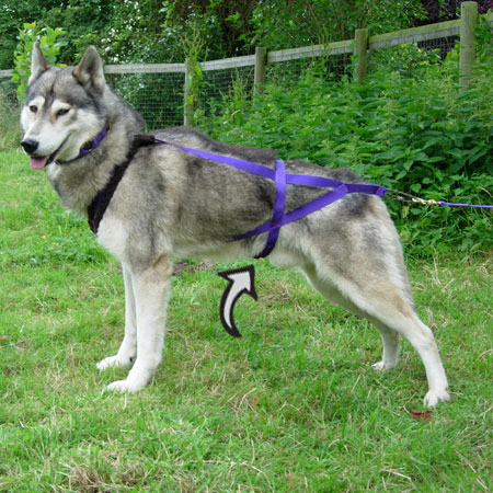 H Back Sledding Harness – S Dog Equipment