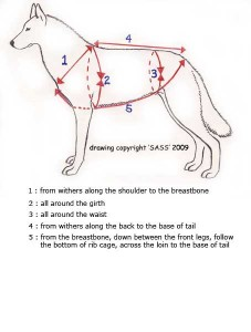 measuring chart for harnesses