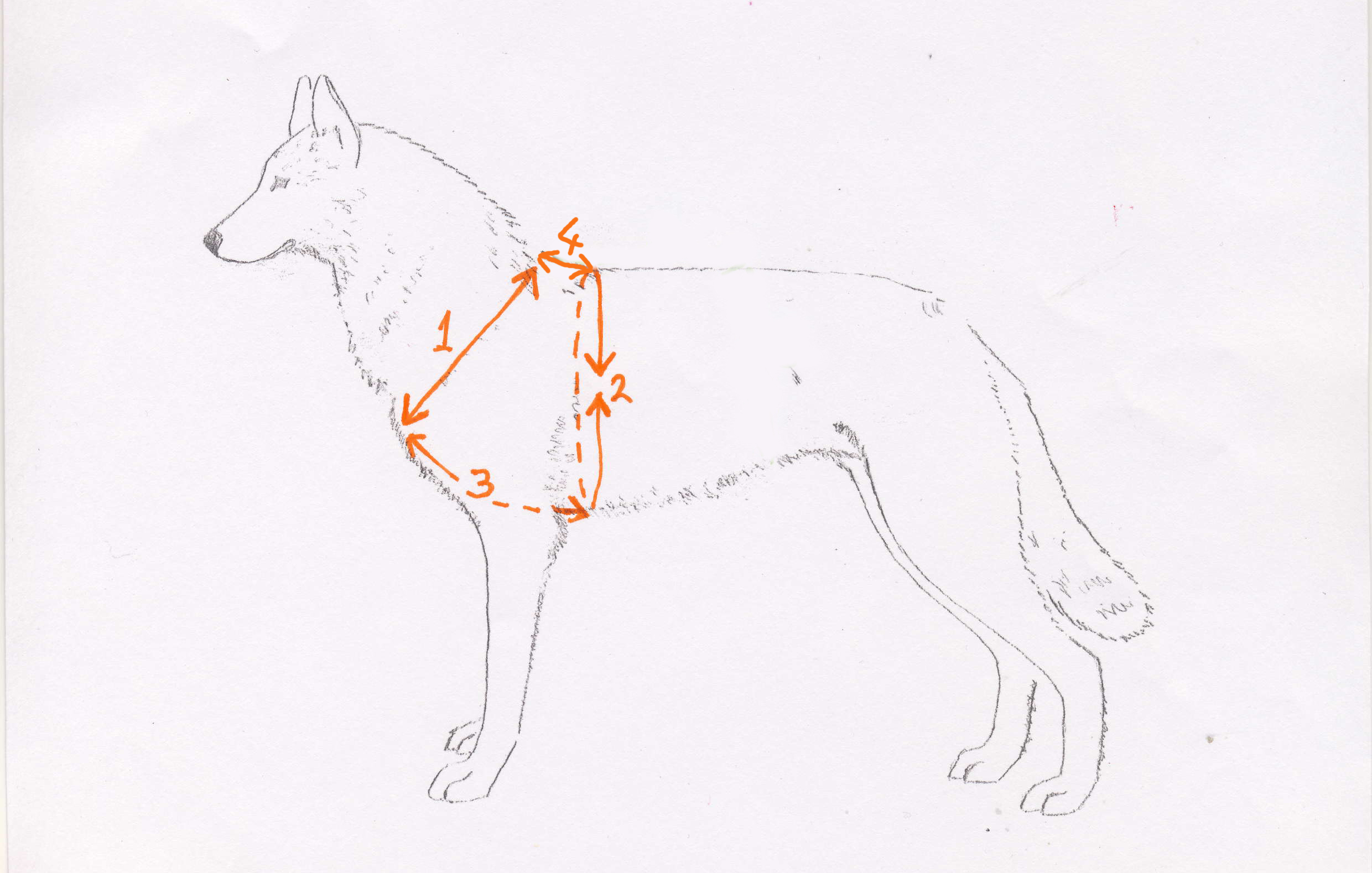 tracking    walking harness