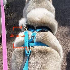 safety lead_distance measuremenrt
